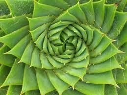 inspirationgreen
