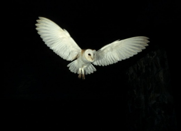www.barnowlsurvey.org.uk